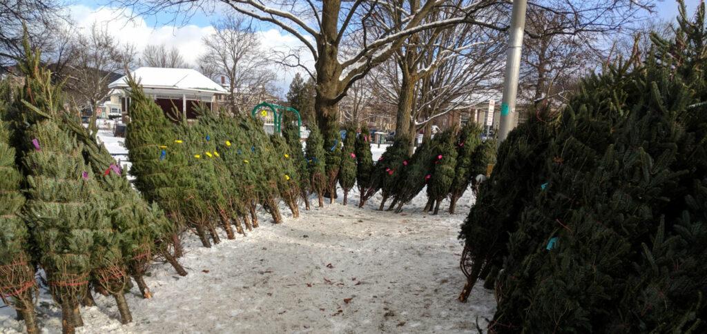 Christmas Tree Sale at Colburn Park