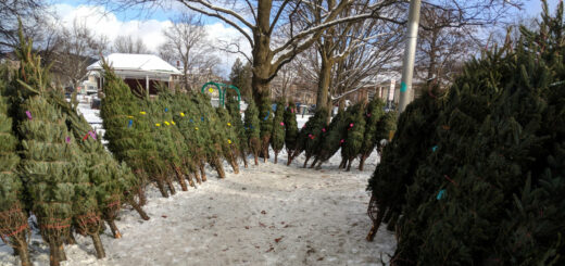 Christmas Tree Sale at Colburn Park